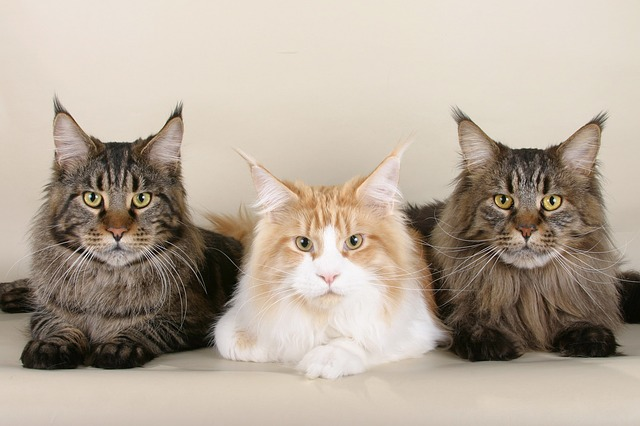 a trio of cats, with the center cat different in coloring from those on each end