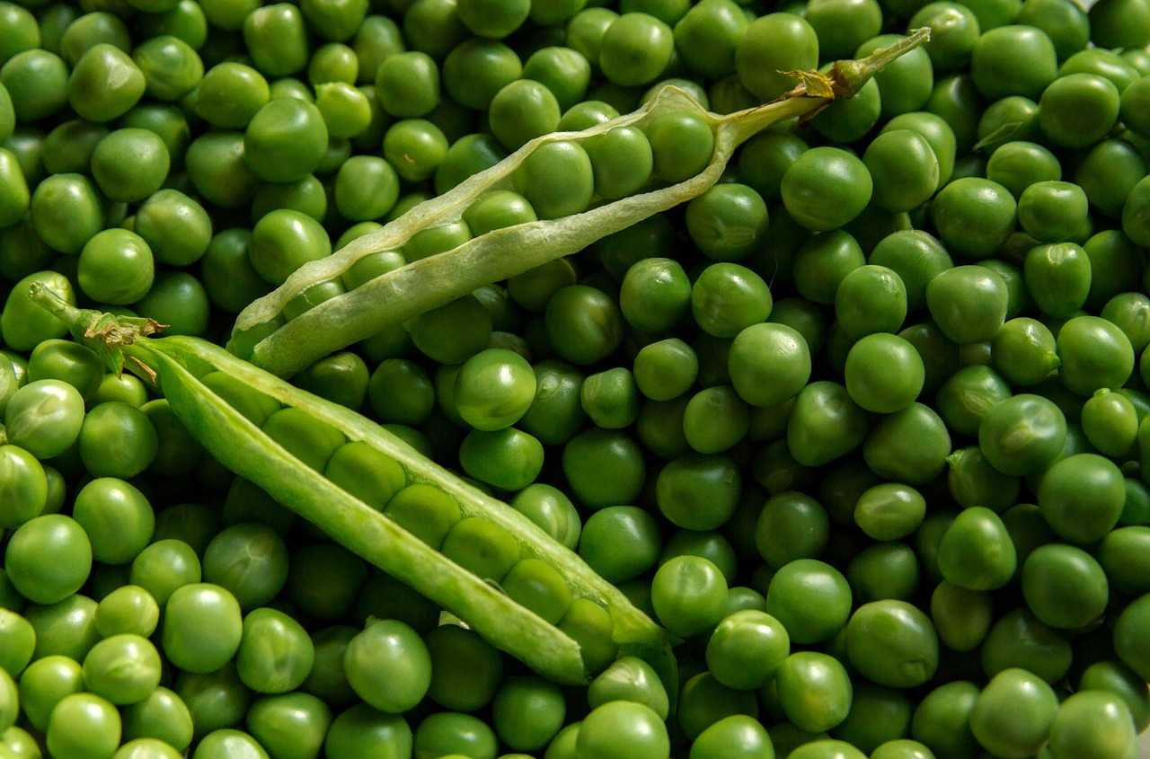 The plate of peas part of writing