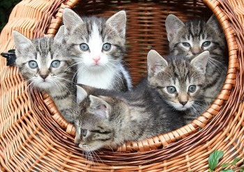 a group of kittens in a basket