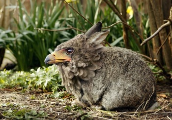 Image of a rabbit with a bird's beak and feathers around the head