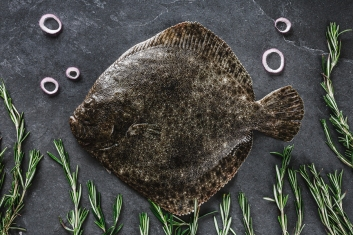 Whole flounder fish with rosemary and onions on dark stone, onions made to look like air bubbles rising to water surface, rosemary like fronds of seaweed