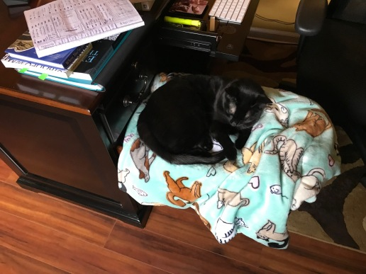 Sleepy black cat curled up on blanket laid over open drawer of a desk