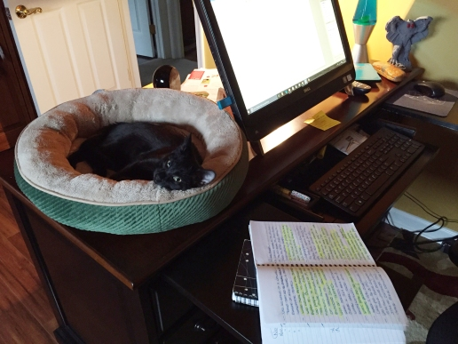 Black cat furled up in round bed on corner of desk